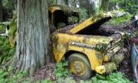 Senų automobilių kapinės