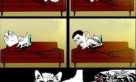 Paikos katės