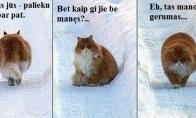 Geriausias pasaulio katinas
