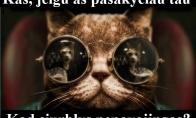 Visas kačių gyvenimas buvo melas