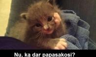 Susidomėjęs katinas