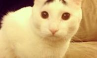 Ar kada matėte katę su antakiais?