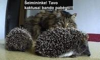 Susirūpinęs katinas