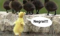 Rasistinis ančiukas