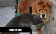 Atlaidus katinėlis