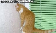 Vargšas katiniukas