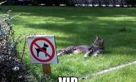 Katiniškas VIP'as
