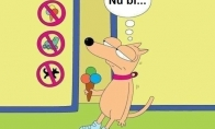 Nenuskilo šunėkui