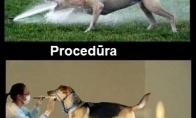 Procedūra ir rezultatas