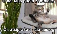 Išsigandęs katinas