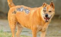 Terminatorius šuo