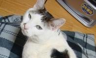 Katinas katine