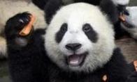 Pandų alkoholis