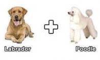 Šunų matematika