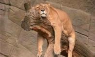 Laaabai pavargę gyvūnai