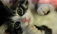 Pasiklydęs kačiukas