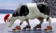 Karvė ant ledo