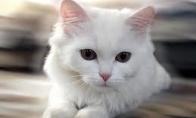 Katinėlis