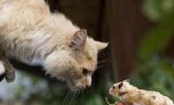 Katė ir pelė