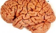 Vyro smegenys