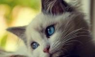 Kačių problemos