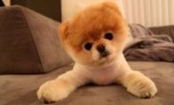 Gražus šuniukas