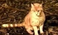 Katė Lesė