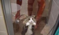 Liūdniausias katinas pasauly
