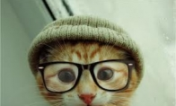 Hipsteris
