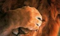 Liūtas karalius