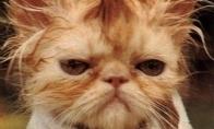 Pagiringų kačių top-10