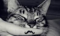 Mielas miegas
