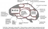 Moters ir vyro smegenys
