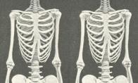 Skeletų grožis