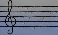Muzikos grožis