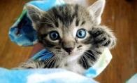 Mieliausias kačiukas