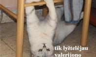 Prisišniojęs katinas