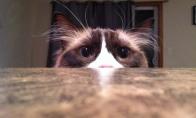 Katinas tycharius