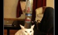 Kaip galima įdarbinti katinus