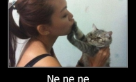 Katės mato viską