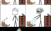 Katinas ar rankšluostis - amžina dilema
