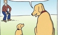 (Ne)kvaili šunys