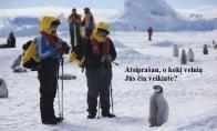 Nustebęs pingvinas