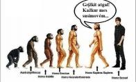 Kai evoliucija susimauna
