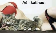 Ar dabar norėtumėte būti katinu?