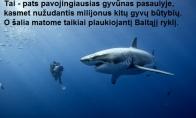 Pavojingiausias gyvūnas pasaulyje