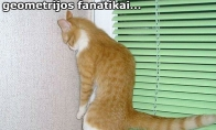 Pas fanatikus papuolęs katinas