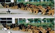 Biški užsirovęs katinas