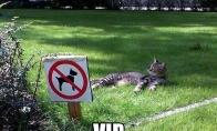 VIP vieta katinui