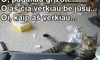 Verksnys katinas